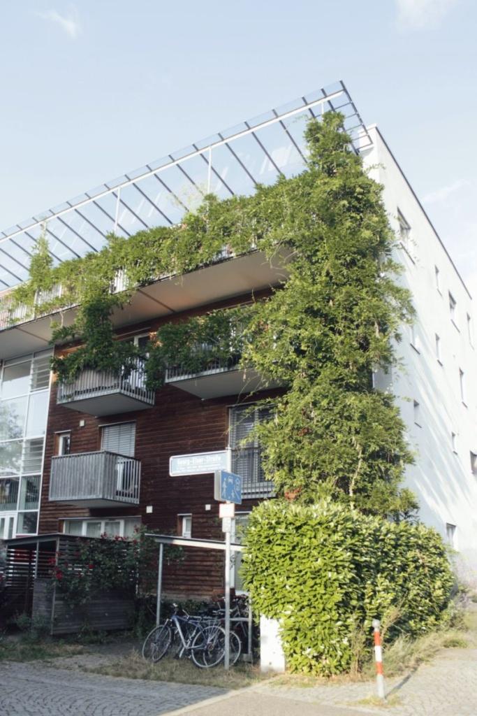 El uso de plantas trepadoras con fines estéticos y de aislamiento también es frecuente